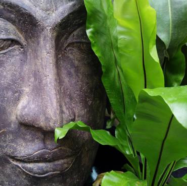 blog de découverte sur histoire et origine de l'ayurveda
